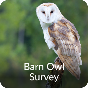 Barn Owl Survey Orbis Ecology Devon