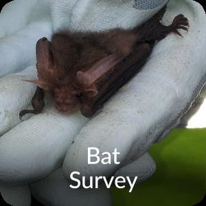 Bat Survey Orbis Ecology Devon
