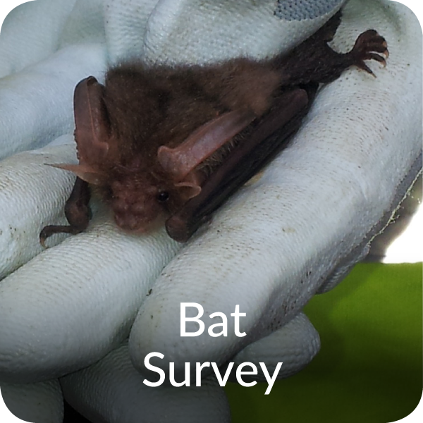 Bat Survey Orbis Ecology Devon
