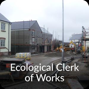 Ecological Clerk of Works Orbis Ecology Devon