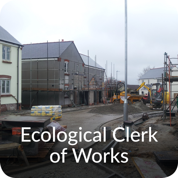 Ecological Clerk of Works Orbis Ecology Devon