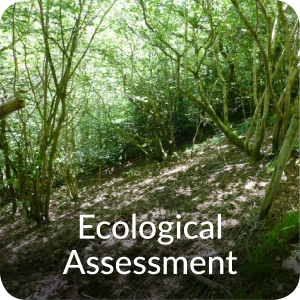 Ecological assessment surveys Orbis ecology Devon