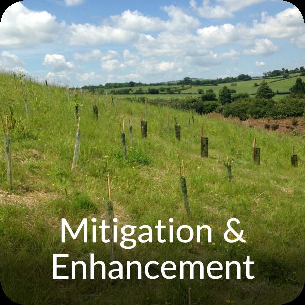 Ecological mitigation & enhancement Orbis Ecology Devon
