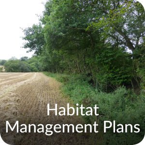 Habitat Management Plans Orbis ecology Devon