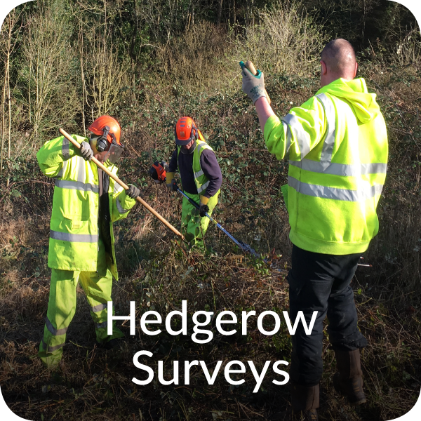 Hedgerow surveys Orbis Ecology Devon