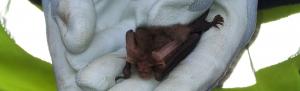 Orbis ecology Exeter Bat Survey feature image