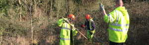 Orbis ecology Exeter Hedgerow services feature image