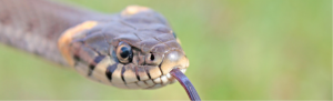 Orbis ecology Exeter Reptile Survey feature image