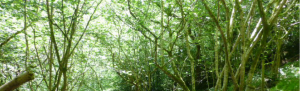 Orbis ecology Exeter ecological assessment feature image