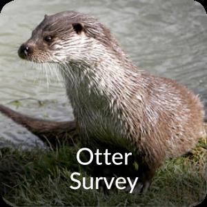 Otter Survey Orbis Ecology Devon