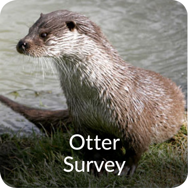Otter Survey Orbis Ecology Devon
