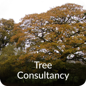 Tree consultancy Orbis Ecology Devon CTA