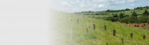 Ecological Mitigation & Enhancement Orbis Ecology Devon slider