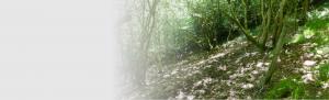 Ecological assessment surveys Orbis ecology Devon Slider