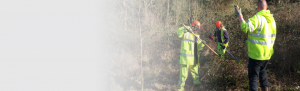 Hedgerow surveys Orbis Ecology Devon slider