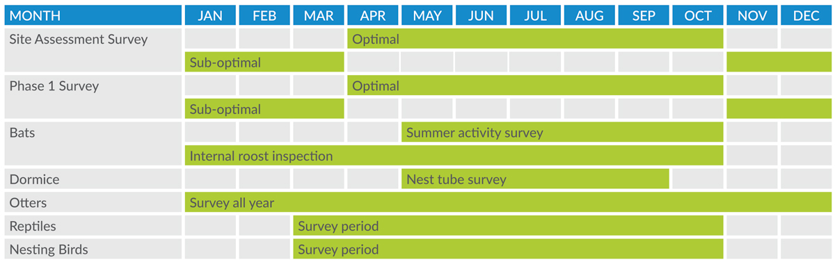 Orbis Ecology Protected Species Survey Timetable