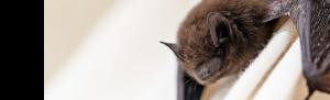 Protected species surveys from Orbis Ecology Devon slider