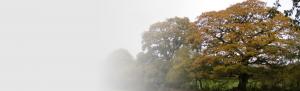 Tree consultancy Orbis Ecology Devon slider