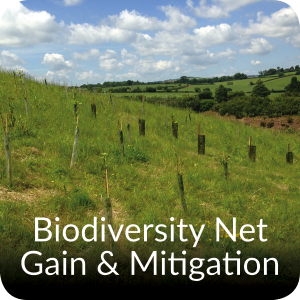 Biodiversity Net Gain and Mitigation Orbis Ecology Devon CTA