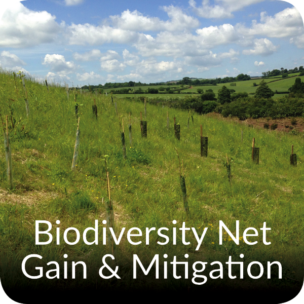 Biodiversity Net Gain and Mitigation Orbis Ecology Devon
